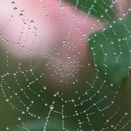 spider-web-1185949_1920