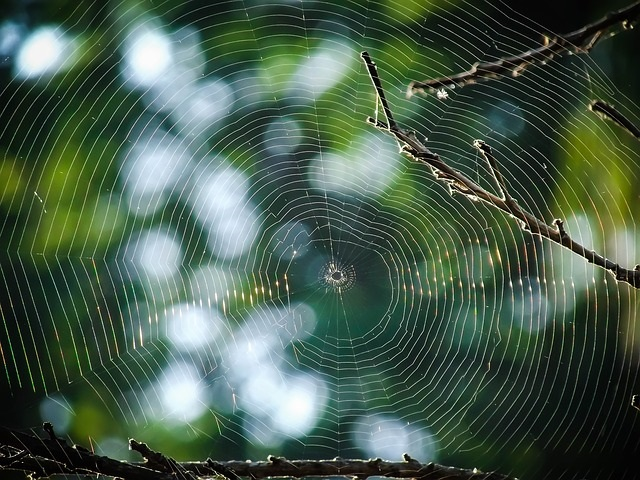 spiderweb-888466_640